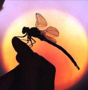 silueta de libélula