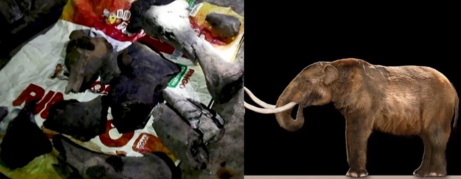 mastodonte fósil