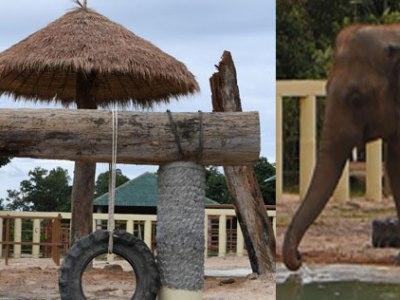 elefante kaavan en su nuevo hogar en camboya